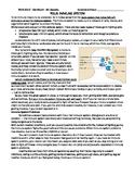Immune System Reading Comprehension