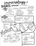 Immune System Sketch Notes ( 2 pages)