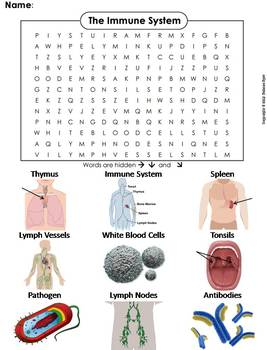 Immune System Worksheet/ Word Search (Lymphatic System Word Search)