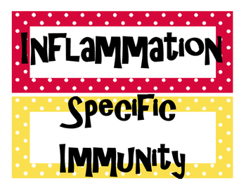 Immune System Word Wall