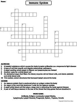 Immune System Worksheet/ Crossword Puzzle