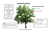 Importance of plant