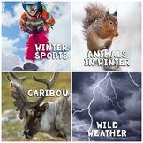 In The News- December Edition (animals, winter, sports, weather)