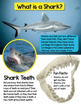 In The News- June Edition (birds, sound & light, bridges, sharks) *PRE-ORDER