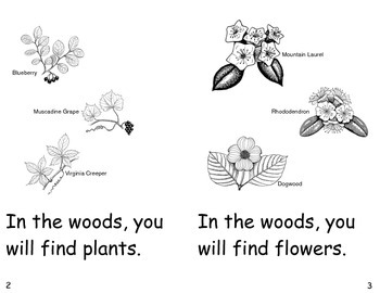 In The Woods- a non-fiction guided reading book