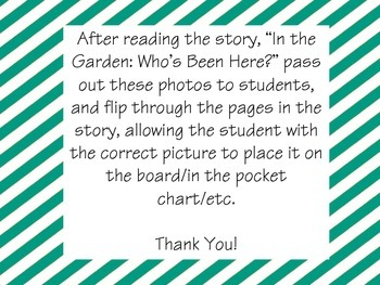 """In the Garden: Who's Been Here?"" Story Retell Pictures"