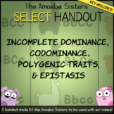 Incomplete Dom., Codominance SELECT Recap Handout + Answer Key by Amoeba Sisters