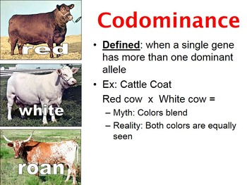 Incomplete Dominance & Codominance Inheritance PowerPoint (& free worksheets)