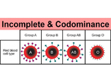 Incomplete Dominance & Codominance PowerPoint (w/ Punnett Squares worksheet)