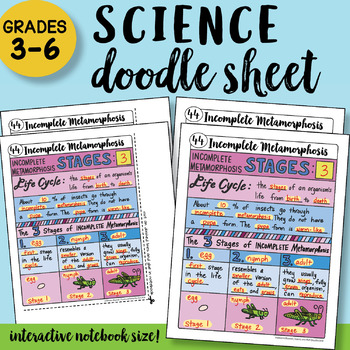 Incomplete Metamorphosis Doodle Notes Sheet - So EASY to Use! PPT included