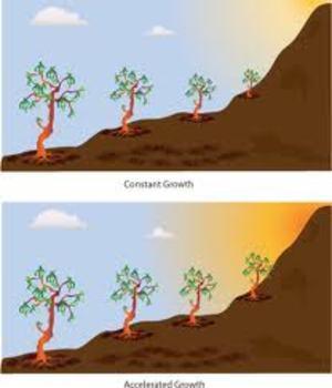 Increasing Growth  Pattern Quiz (10 Q)