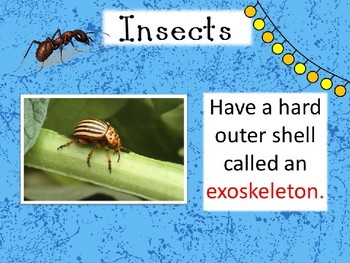 Incredible Insects PPT Riddle Game and Worksheets