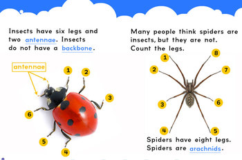 Incredible Insects flip e-book