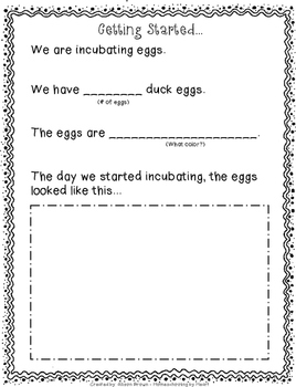 Incubating Duck Eggs: An Activity Book