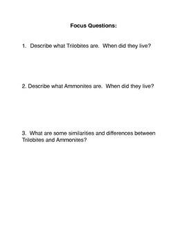 Index Fossils: Trilobites and Ammonites