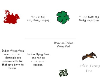 Indian Flying Fox -- 10 Resources -- Coloring Pages, Reading & Activities
