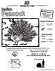 Indian Peacock -- 10 Resources -- Coloring Pages, Reading & Activities