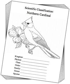 Indiana State Bird Notebooking Set (Northern Cardinal)