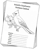 Indiana State Bird Notebooking Set (Northern Cardinal)