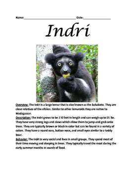 Indri - lemur informational article lesson questions facts vocabulary