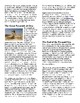 Info Reading Text/Vocab Activity - The Egyptian Pyramids (no prep/sub plans)
