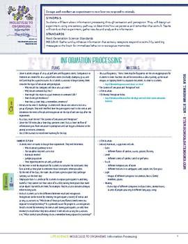 Information Processing  - STEM Lesson Plan