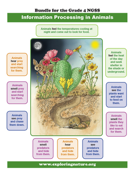 How Animals Sense the World - Information Processing - Grade 4 NGSS