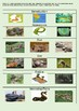 Information Report - Anaconda Snake