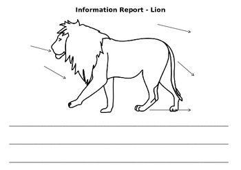 Information Report- Lion