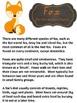 Information Report Pack BUNDLE - Forest Animals