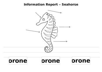 Information Report- Seahorse