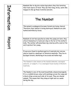 Information Report - The Australian Numbat