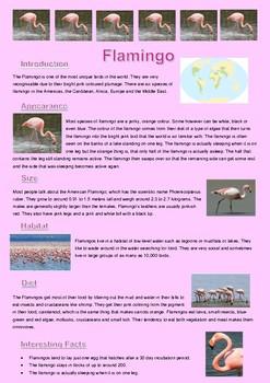 Information Report - The Flamingo