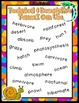 Information Report Writing Pack {5 Anchor Charts, 4 Differ