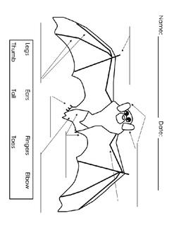 Informational Reading - Bats, Radar & Sonar