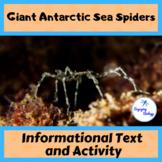 Informational Text Activity: Giant Antarctic Sea Spiders