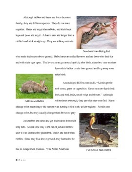Informational Text Article: Rabbits, Jackrabbits, and Hares