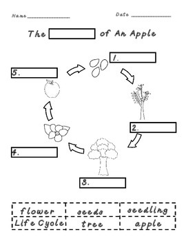 Informational Text Comprehension Activities:The Apple Orchard