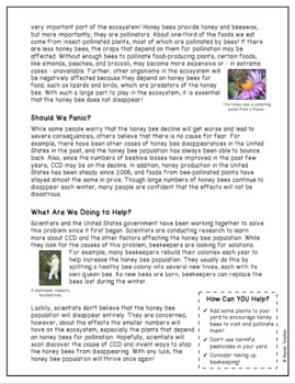 Informational Text: Disappearing Honey Bees