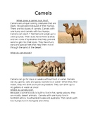Informational Text about Camels, Wolves, Giraffes, Tigers