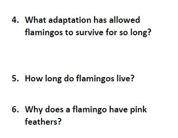 Informational Text and Questions for Flamingos