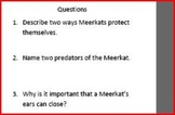 Informational Text and Questions on the Meerkat