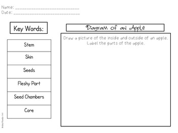 Informational Writing All About Apples