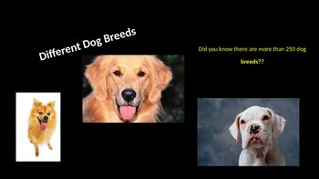 Informational Writing Dog power Point
