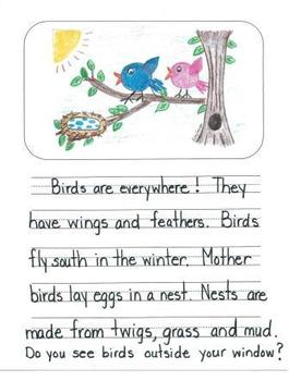 Informational Writing Mentor Texts in First Grade: Guinea Pigs, Birds and Bees