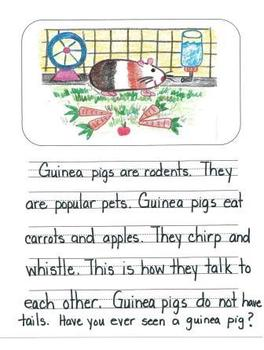 Informational Writing Mentor Texts in First Grade: Guinea