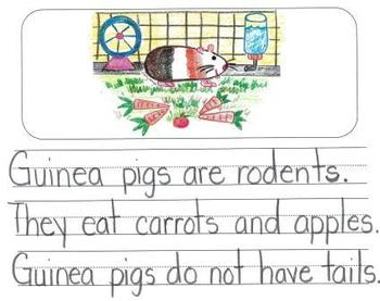 Informational Writing Mentor Texts in Kindergarten: Guinea Pigs, Birds and Bees