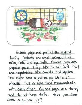 Informational Writing Mentor Texts in Second Grade:  Guinea Pigs, Birds and Bees