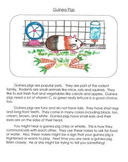 Informational Writing Mentor Texts in Third Grade: Guinea Pigs, Birds and Bees