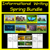 Informational Writing and PowerPoint Spring Bundle